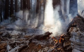 a photo of a forest after it has been on fire. Dead trees scatter the floor.